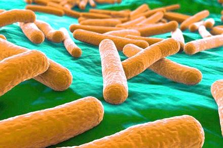 какие пробиотики для похудения